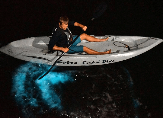 Fin Expeditions